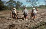 "<span class=""caption-caption"">A gang working on sugar cane tram tracks, near Childers</span>, 1976. <br />Slide, collection of <span class=""caption-contributor"">George Moller</span>."