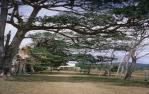 "<span class=""caption-caption"">Old avenue of trees, Cooktown</span>, 1972. <br />Slide, collection of <span class=""caption-contributor"">Ruth Read</span>."