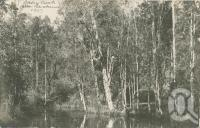 "<span class=""caption-caption"">Oxley Creek</span>, 1907. <br />Postcard, collection of <span class=""caption-contributor"">Centre for the Government of Queensland</span>."