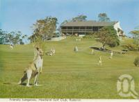 "<span class=""caption-caption"">Headland Golf Club, Buderim</span>, c1970. <br />Postcard folder by <span class=""caption-publisher"">Bernard Kuskopf</span>, collection of <span class=""caption-contributor"">Centre for the Government of Queensland</span>."