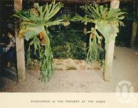 "<span class=""caption-caption"">Fernery, the Oasis</span>, c1960. <br />Postcard folder by <span class=""caption-publisher"">Sydney G Hughes Pty Ltd</span>, collection of <span class=""caption-contributor"">John Young</span>."