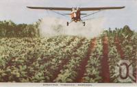 "<span class=""caption-caption"">Spraying tobacco, Mareeba</span>, c1961. <br />Postcard folder by <span class=""caption-publisher"">GK Bolton</span>, collection of <span class=""caption-contributor"">John Young</span>."