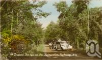 "<span class=""caption-caption"">Palmerston Highway, near Millaa Millaa</span>, c1928. <br />Postcard by <span class=""caption-publisher"">Unknown Publisher</span>, collection of <span class=""caption-contributor"">John Young</span>."