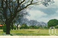 "<span class=""caption-caption"">Jacaranda trees in New Farm Park</span>, c1958. <br />Postcard folder by <span class=""caption-publisher"">Sydney G Hughes Pty Ltd</span>, collection of <span class=""caption-contributor"">Centre for the Government of Queensland</span>."