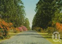 "<span class=""caption-caption"">Ann Street, scenic drive Botanic Gardens, Rockhampton</span>, c1962. <br />Postcard by <span class=""caption-publisher"">Murray Views Pty Ltd</span>, collection of <span class=""caption-contributor"">Centre for the Government of Queensland MS</span>."