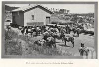 "<span class=""caption-caption"">Pack mules laden with tin at the Herberton Railway Station</span>. <br />From <span class=""caption-book"">The Queenslander Annual</span>, <span class=""caption-publisher"">Queensland Newspapers</span>, 1930, collection of <span class=""caption-contributor"">Fryer Library, UQ</span>."