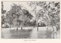 """<span class=""""caption-caption"""">Lagoon, Ayr district</span>. <br />From <span class=""""caption-book"""">North Queensland</span>, <span class=""""caption-publisher"""">Government Printer</span>, 1920, collection of <span class=""""caption-contributor"""">Fryer Library, UQ</span>."""