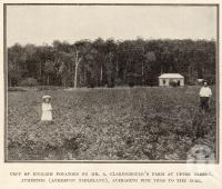 "<span class=""caption-caption"">Potatoes, Upper Barron, Atherton (Atherton Tableland)</span>. <br />From <span class=""caption-book"">Tablelands of North Queensland</span>, <span class=""caption-publisher"">Queensland Government Intelligence and Tourist Bureau</span>, 1918, collection of <span class=""caption-contributor"">Fryer Library, UQ</span>."