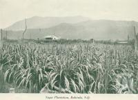 "<span class=""caption-caption"">Sugar plantation, Babinda</span>, c1925. <br />Booklet, collection of <span class=""caption-contributor"">John Young</span>."