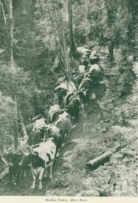 "<span class=""caption-caption"">Hauling timber, Albert River</span>, c1925. <br />Booklet, collection of <span class=""caption-contributor"">John Young</span>."