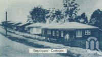 "<span class=""caption-caption"">Tinaroo employees' cottages</span>, 1958. <br />Brochure, collection of <span class=""caption-contributor"">John Young</span>."