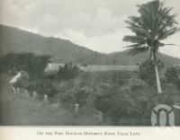 "<span class=""caption-caption"">On the Port Douglas-Mowbray Tram Line</span>. <br />From <span class=""caption-book"">Tours in the Cairns District, Handbook to Cairns and Hinterland</span>, <span class=""caption-creator"">Queensland Railways</span>, Brisbane, 1912, collection of <span class=""caption-contributor"">Centre for the Government of Queensland</span>."