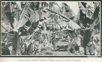 "<span class=""caption-caption"">Banana grove, Buderim Mountain</span>. <br />From <span class=""caption-book"">Glimpses of Sunny Queensland (3rd edition)</span>, <span class=""caption-creator"">Queensland Government Intelligence and Tourist Bureau</span>, Brisbane, 1914, collection of <span class=""caption-contributor"">Centre for the Government of Queensland</span>."