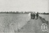 "<span class=""caption-caption"">Stripping wheat on Bungeworgorai State Farm, near Roma, Maranoa District</span>. <br />From <span class=""caption-book"">The Pocket Queensland</span>, <span class=""caption-creator"">Queensland Government Intelligence and Tourist Bureau</span>, Brisbane, 1921, collection of <span class=""caption-contributor"">Centre for the Government of Queensland</span>."