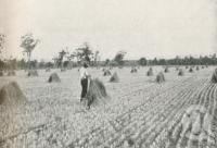 "<span class=""caption-caption"">Stooks of wheat on Bungeworgorai State Farm, Roma, Maranoa District</span>. <br />From <span class=""caption-book"">The Pocket Queensland</span>, <span class=""caption-creator"">Queensland Government Intelligence and Tourist Bureau</span>, Brisbane, 1921, collection of <span class=""caption-contributor"">Centre for the Government of Queensland</span>."