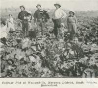 "<span class=""caption-caption"">Cabbage plot at Wallumbilla, Maranoa District</span>. <br />From <span class=""caption-book"">The Pocket Queensland</span>, <span class=""caption-creator"">Queensland Government Intelligence and Tourist Bureau</span>, Brisbane, 1921, collection of <span class=""caption-contributor"">Centre for the Government of Queensland</span>."