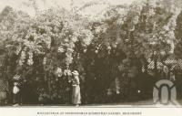 "<span class=""caption-caption"">Bougainvilia at Nindoornbah Homestead garden, Beaudesert</span>. <br />From <span class=""caption-book"">Official Souvenir Beaudesert and National Park Lamington Plateau</span>, <span class=""caption-creator"">Beaudesert Shire Council</span>, Brisbane, 1935, collection of <span class=""caption-contributor"">Centre for the Government of Queensland</span>."