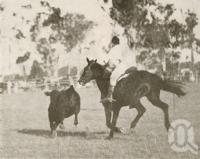 "<span class=""caption-caption"">Cattle drafting at the Beaudesert show</span>. <br />From <span class=""caption-book"">Official Souvenir Beaudesert and National Park Lamington Plateau</span>, <span class=""caption-creator"">Beaudesert Shire Council</span>, Brisbane, 1935, collection of <span class=""caption-contributor"">Centre for the Government of Queensland</span>."