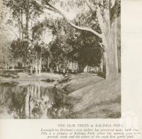 "<span class=""caption-caption"">Gum trees at Kalinga Park</span>. <br />From <span class=""caption-book"">Brisbane, Australia's Sunshine City, Souvenir Commemorating the Visit of HRH The Dule of Gloucester</span>, <span class=""caption-creator"">Brisbane City Council</span>, Brisbane, 1934, collection of <span class=""caption-contributor"">Centre for the Government of Queensland</span>."