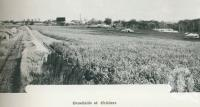 "<span class=""caption-caption"">Canefields at Childers</span>. <br />From <span class=""caption-book"">Australia Unlimited</span>, <span class=""caption-creator"">Edwin J Brady</span>, <span class=""caption-publisher"">George Robertson & Co</span>, Melbourne, 1918, collection of <span class=""caption-contributor"">Centre for the Government of Queensland</span>."