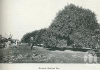 "<span class=""caption-caption"">Orchard at Redland Bay</span>. <br />From <span class=""caption-book"">Australia Unlimited</span>, <span class=""caption-creator"">Edwin J Brady</span>, <span class=""caption-publisher"">George Robertson & Co</span>, Melbourne, 1918, collection of <span class=""caption-contributor"">Centre for the Government of Queensland</span>."