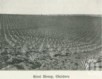 "<span class=""caption-caption"">Sisal Hemp, Childers</span>. <br />From <span class=""caption-book"">Australia Unlimited</span>, <span class=""caption-creator"">Edwin J Brady</span>, <span class=""caption-publisher"">George Robertson & Co</span>, Melbourne, 1918, collection of <span class=""caption-contributor"">Centre for the Government of Queensland</span>."