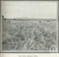 "<span class=""caption-caption"">Orion Downs, Springsure District</span>. <br />From <span class=""caption-book"">Australia Unlimited</span>, <span class=""caption-creator"">Edwin J Brady</span>, <span class=""caption-publisher"">George Robertson & Co</span>, Melbourne, 1918, collection of <span class=""caption-contributor"">Centre for the Government of Queensland</span>."