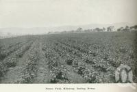 "<span class=""caption-caption"">Potato field, Killarney</span>. <br />From <span class=""caption-book"">Australia Unlimited</span>, <span class=""caption-creator"">Edwin J Brady</span>, <span class=""caption-publisher"">George Robertson & Co</span>, Melbourne, 1918, collection of <span class=""caption-contributor"">Centre for the Government of Queensland</span>."
