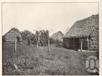 "<span class=""caption-caption"">Kanaka' Huts, Farnbro, Childers</span>. <br />From <span class=""caption-book"">Queensland Agricultural Journal</span>, 1904, collection of <span class=""caption-contributor"">Fryer Library, UQ</span>."