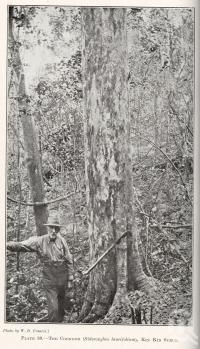 "<span class=""caption-caption"">The coondoo, Kin Kin Scrub</span>. <br />From <span class=""caption-book"">Queensland Agricultural Journal</span>, 1921, collection of <span class=""caption-contributor"">Fryer Library, UQ</span>."