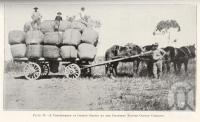 "<span class=""caption-caption"">A consignment of cotton grown by the Charters Towers Cotton Company</span>. <br />From <span class=""caption-book"">Queensland Agricultural Journal</span>, 1925, collection of <span class=""caption-contributor"">Fryer Library, UQ</span>."