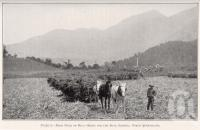 "<span class=""caption-caption"">From field to mill, ready for the road, Babinda</span>. <br />From <span class=""caption-book"">Queensland Agricultural Journal</span>, 1929, collection of <span class=""caption-contributor"">Fryer Library, UQ</span>."