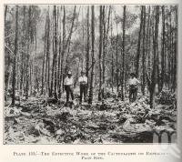 "<span class=""caption-caption"">The effective work of the cactoblastis on experiment plot site</span>. <br />From <span class=""caption-book"">Queensland Agricultural Journal</span>, 1930, collection of <span class=""caption-contributor"">Fryer Library, UQ</span>."