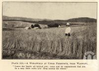 "<span class=""caption-caption"">A wheatfield at Upper Freestone, near Warwick</span>. <br />From <span class=""caption-book"">Queensland Agricultural Journal</span>, 1934, collection of <span class=""caption-contributor"">Fryer Library, UQ</span>."