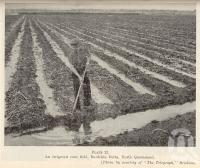 "<span class=""caption-caption"">An irrigated cane field, Burdekin Delta, north Queensland</span>. <br />From <span class=""caption-book"">Queensland Agricultural Journal</span>, 1936, collection of <span class=""caption-contributor"">Fryer Library, UQ</span>."