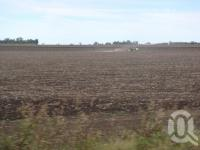 "<span class=""caption-caption"">Sorghum fields, Emerald Shire</span>, 2009. <br />Digital image, collection of <span class=""caption-contributor"">Centre for the Government of Queensland MS</span>."