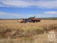 "<span class=""caption-caption"">Sorghum harvester, Emerald Shire</span>, 2009. <br />Digital image, collection of <span class=""caption-contributor"">Centre for the Government of Queensland MS</span>."