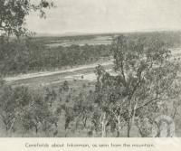 "<span class=""caption-caption"">Canefields about Inkerman</span>, 1940. <br />Newspaper, collection of <span class=""caption-contributor"">John Young</span>."