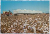 "<span class=""caption-caption"">Cotton Centre of Queensland, Dawson - Callide Valley</span>, c1970-2000. <br />Postcard, collection of <span class=""caption-contributor"">Murray Views Collection</span>."