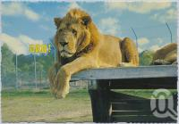 "<span class=""caption-caption"">Bullens African Lion Park and Zoo, Yatala</span>, c1970-2000. <br />Postcard, collection of <span class=""caption-contributor"">Murray Views Collection</span>."