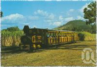 "<span class=""caption-caption"">Tourists exploring the sugar fields in the comfort of the historic Ballyhooley Steam Express, Mossman Central Mill</span>, c1970-2000. <br />Postcard, collection of <span class=""caption-contributor"">Murray Views Collection</span>."