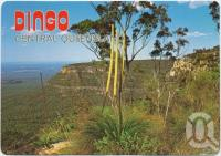 "<span class=""caption-caption"">Dingo, Dingo's National Park, The Blackdown Tablelands</span>, c1970-2000. <br />Postcard, collection of <span class=""caption-contributor"">Murray Views Collection</span>."