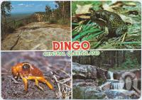 "<span class=""caption-caption"">Dingo</span>, c1970-2000. <br />Postcard, collection of <span class=""caption-contributor"">Murray Views Collection</span>."