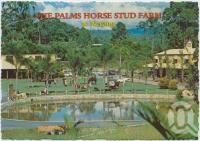 "<span class=""caption-caption"">The Palms Horse Stud, Nerang, Gold Coast, only 10 kms from Surfers Paradise</span>, c1970-2000. <br />Postcard, collection of <span class=""caption-contributor"">Murray Views Collection</span>."