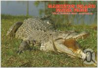 "<span class=""caption-caption"">Saltwater or Estuarine Crocodile, Hamilton Island Fauna Park</span>, c1970-2000. <br />Postcard, collection of <span class=""caption-contributor"">Murray Views Collection</span>."