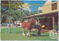 "<span class=""caption-caption"">The Palms Horse Stud Farm, ""Jazz"" - the Big Clydesdale Stallion strolling the Park, Nerang</span>, c1970-2000. <br />Postcard, collection of <span class=""caption-contributor"">Murray Views Collection</span>."