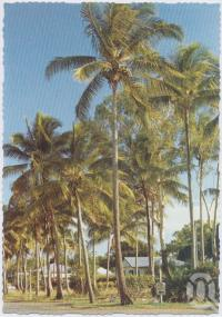"<span class=""caption-caption"">Esplanade, Bucasia</span>, c1970-2000. <br />Postcard, collection of <span class=""caption-contributor"">Murray Views Collection</span>."