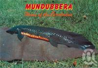 "<span class=""caption-caption"">Queensland Lungfish, Mundubbera</span>, c1970-2000. <br />Postcard, collection of <span class=""caption-contributor"">Murray Views Collection</span>."