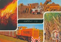 "<span class=""caption-caption"">Sugar cane, Mackay</span>, 1985. <br />Postcard by <span class=""caption-publisher"">Murray Views Pty Ltd</span>, collection of <span class=""caption-contributor"">Centre for the Government of Queensland</span>."
