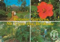 "<span class=""caption-caption"">Botanic Gardens, Mount Coot-tha</span>, c1980. <br />Postcard by <span class=""caption-publisher"">Murray Views Pty Ltd</span>, collection of <span class=""caption-contributor"">Centre for the Government of Queensland</span>."